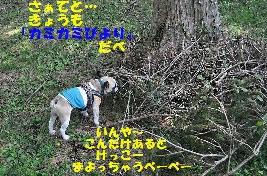 DSC_0552.jpg