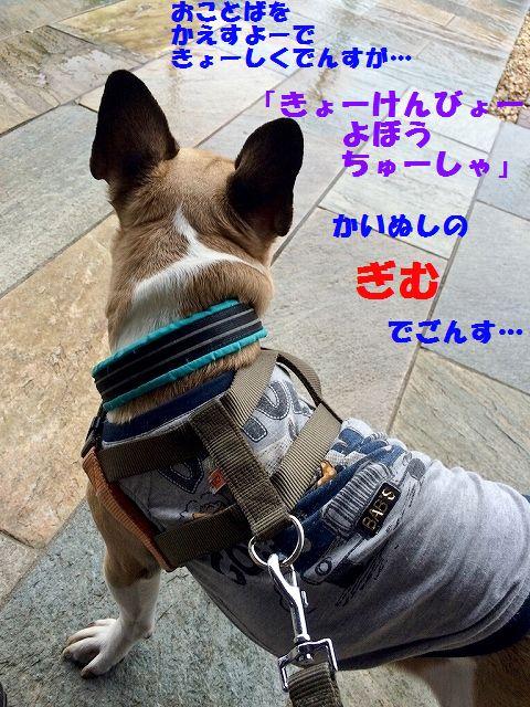 IMG_0990.jpg