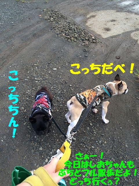 IMG_1547_2016092013485318c.jpg