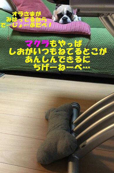 IMG_2043.jpg