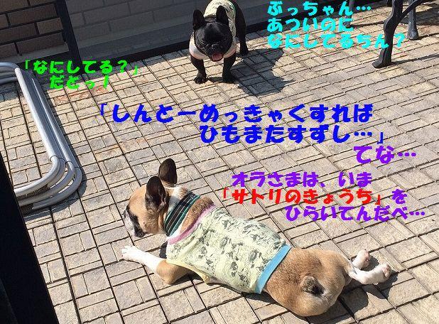 IMG_2604_2016060313590371b.jpg