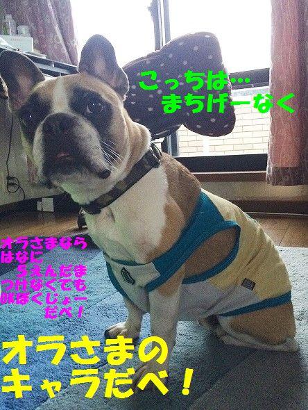 IMG_2682_201609131352550e7.jpg