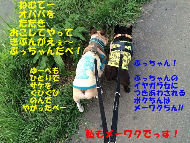 IMG_3254.jpg