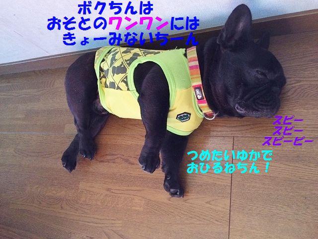 IMG_3601_20160621134034ac8.jpg