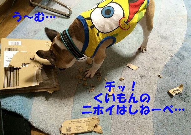 IMG_3959_20160627083814b0c.jpg