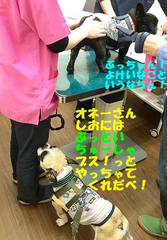 IMG_4076_201604221307329f6.jpg