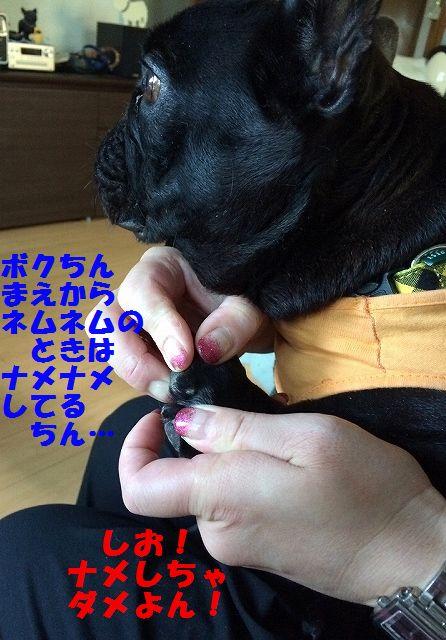 IMG_5667.jpg