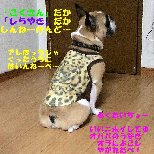 IMG_5687.jpg