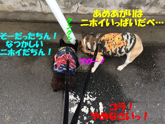 IMG_5762.jpg