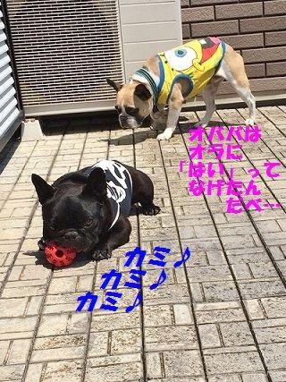 IMG_7350_20160527132601a3e.jpg