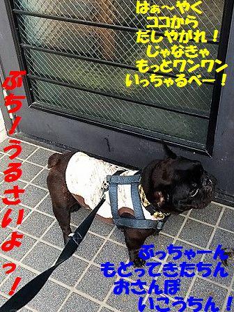 IMG_7868_2016092611054541f.jpg