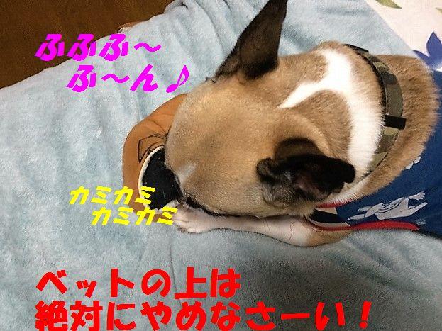 IMG_8222_20161013141127a25.jpg