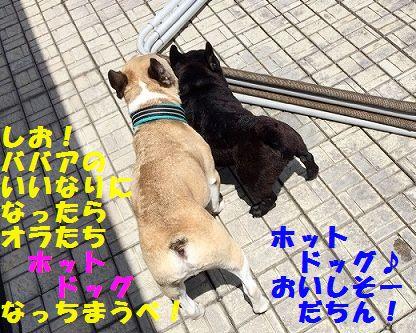 IMG_8384.jpg