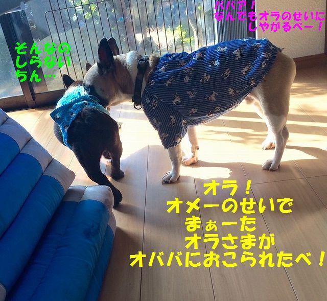 IMG_9401.jpg