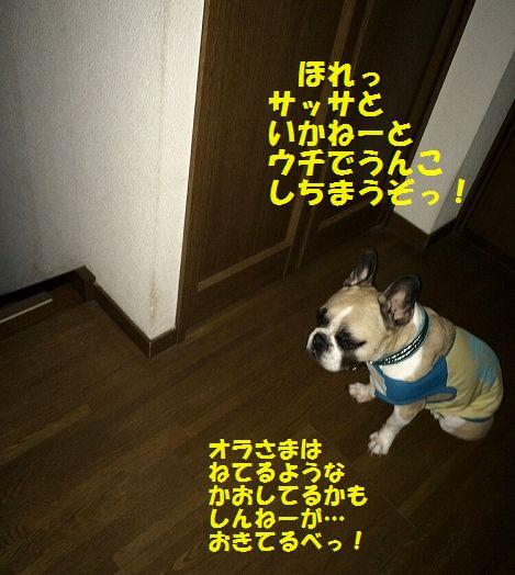 IMG_9792_201606201426369f7.jpg