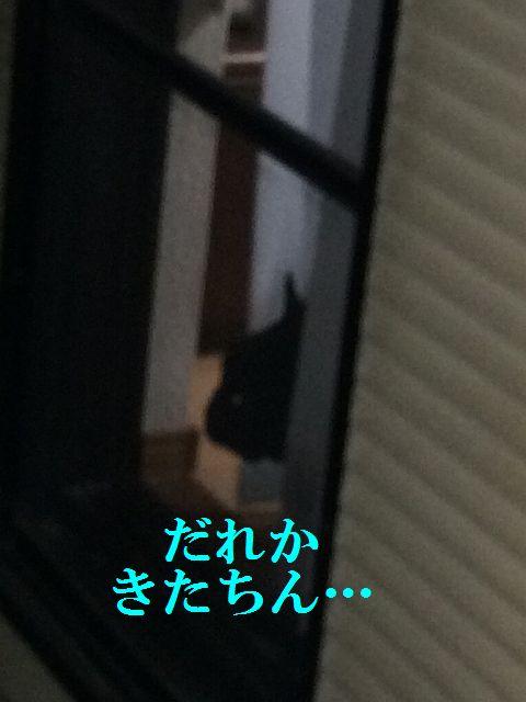 IMG_9955.jpg