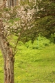 さくら並木2