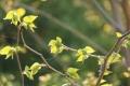 お花見27
