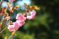 春の庭2016-102