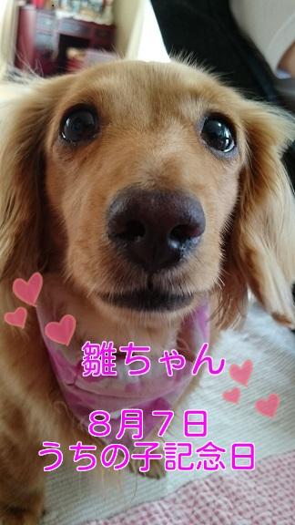 うちの子記念日♡6周年