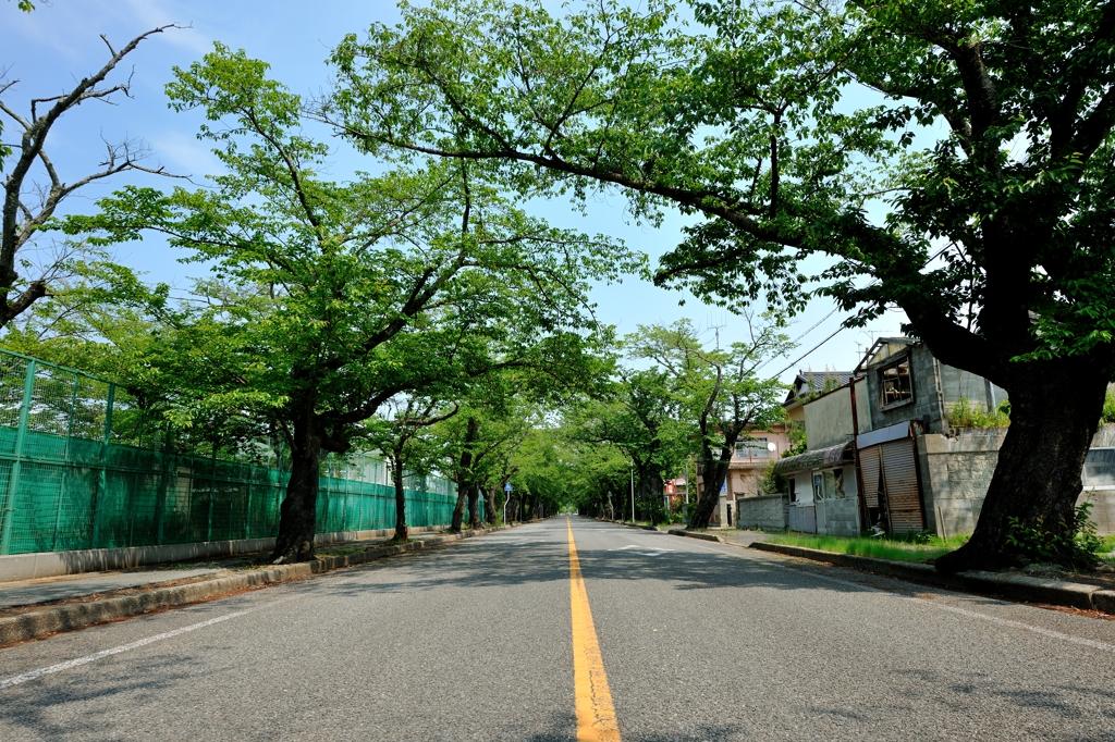 桜通り・富岡二中前