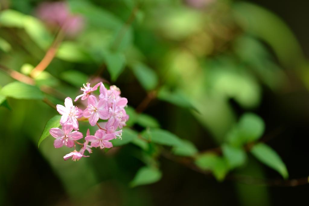 名無しの花