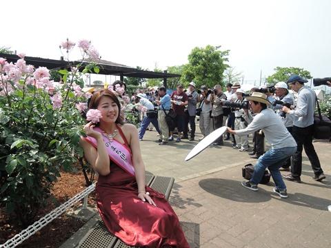 伊奈バラ祭り2