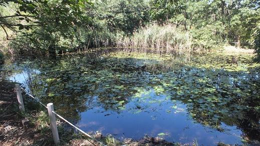 キウシト湿原 (2)