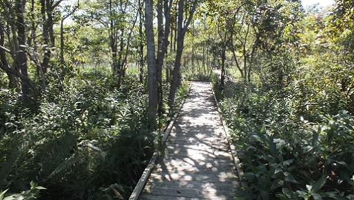 キウシト湿原 (9)