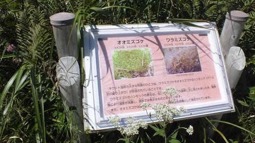 キウシト湿原 (10)