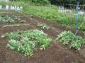 横の雑草5