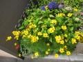 黄色い花も