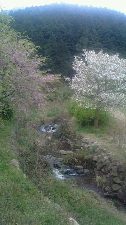 4 ひなさん 深坂の森3-1