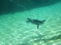 泳げペンギン君!