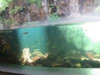 淡水魚もいます