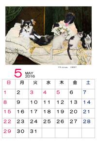 2016年5月babaちゃまカレンダー①
