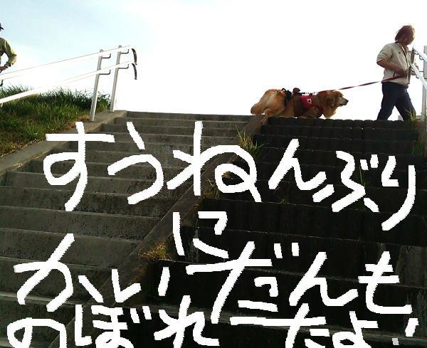 数年ぶりの階段を上るラヴィン②