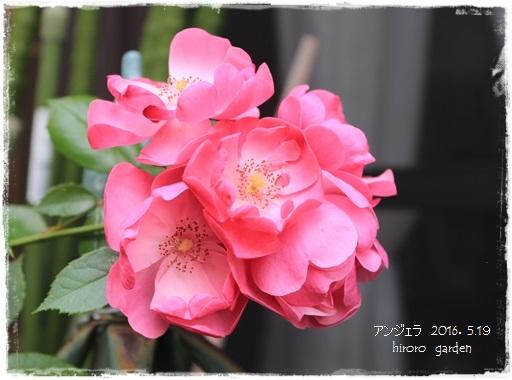 20160519IMG_9652-21.jpg