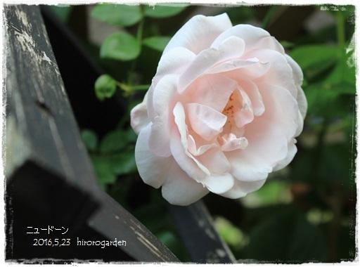 20160523IMG_9869-14.jpg