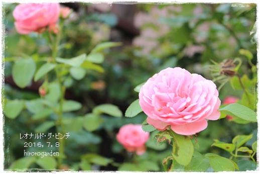 IMG_082711.jpg