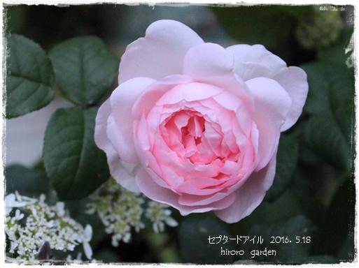 IMG_961311.jpg