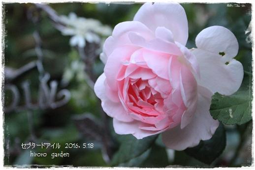 IMG_961511.jpg
