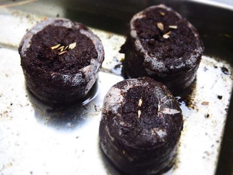 ジャジー混合種植え