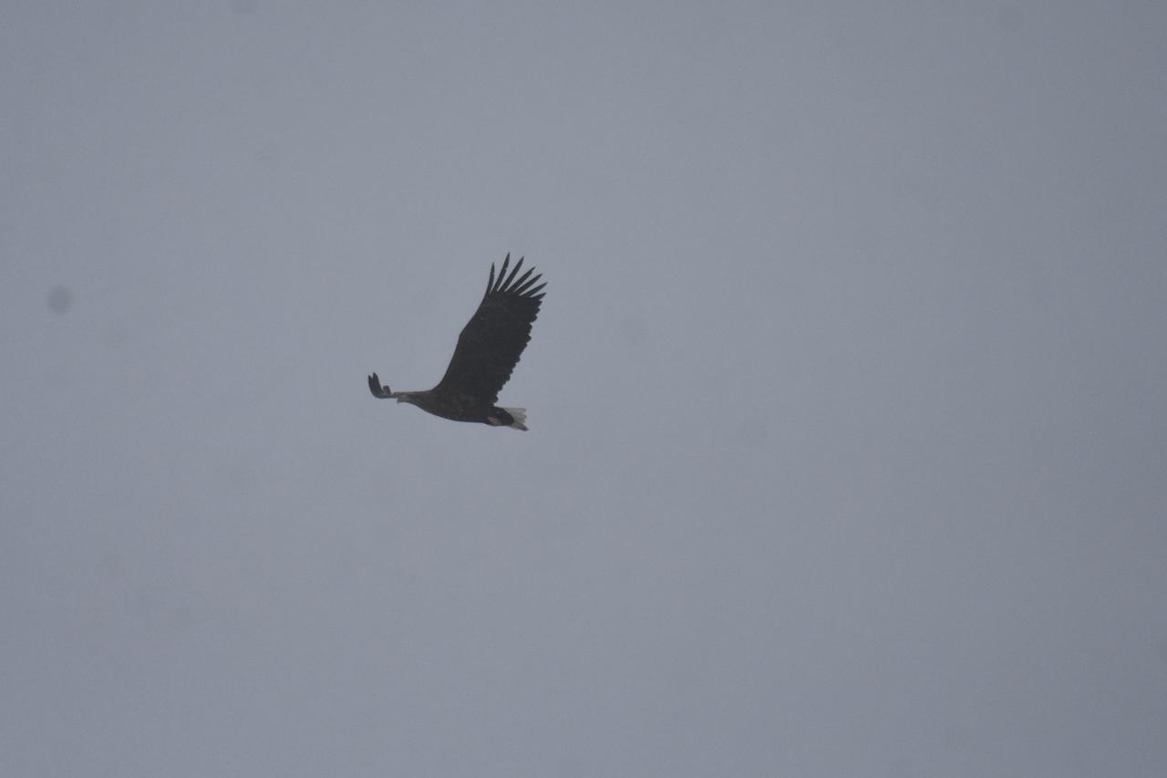 カッコウと戦う野鳥たち8