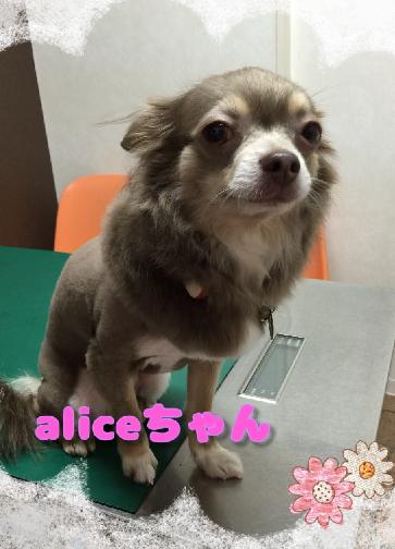 アリスちゃん3