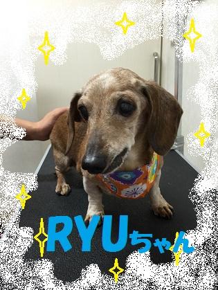 RYUちゃん1