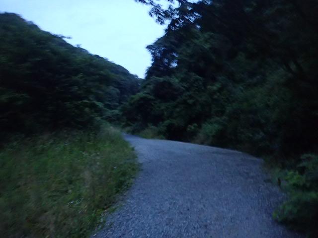 ホタルの森 (1)