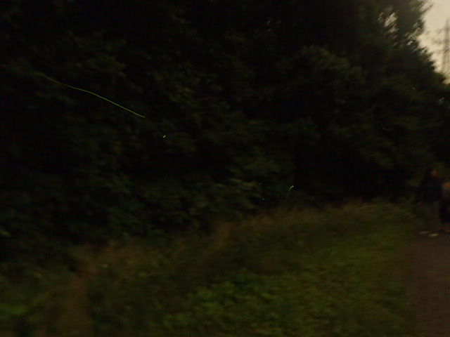 ホタルの森 (6)