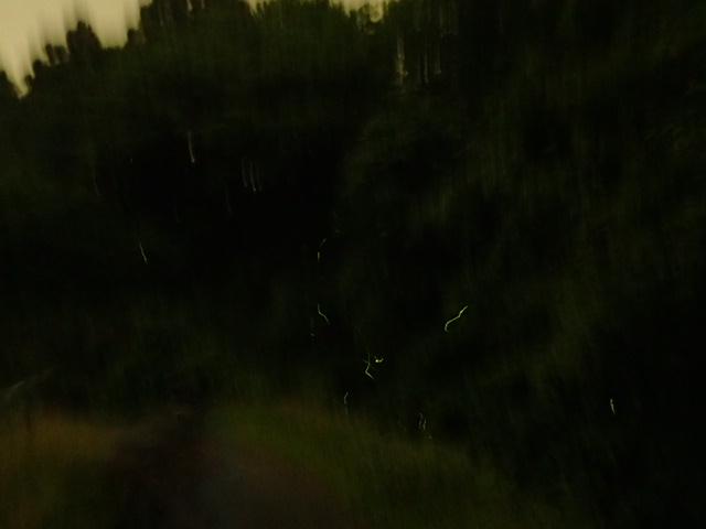 ホタルの森 (8)