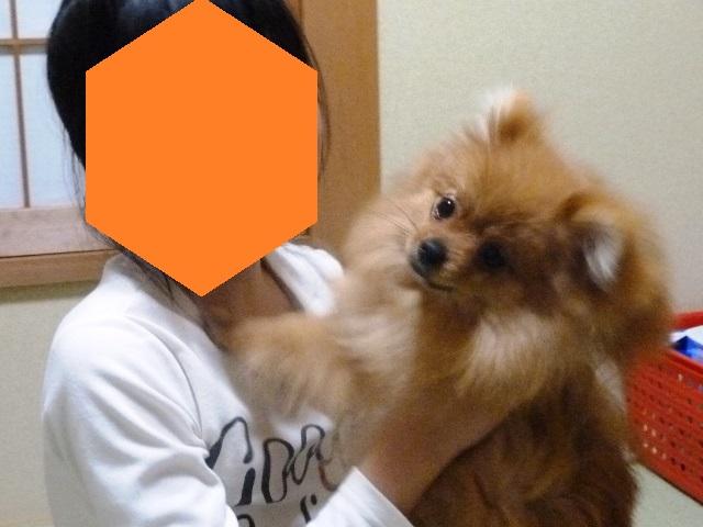20150310ポン太ガム①
